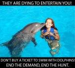 dolphin_04